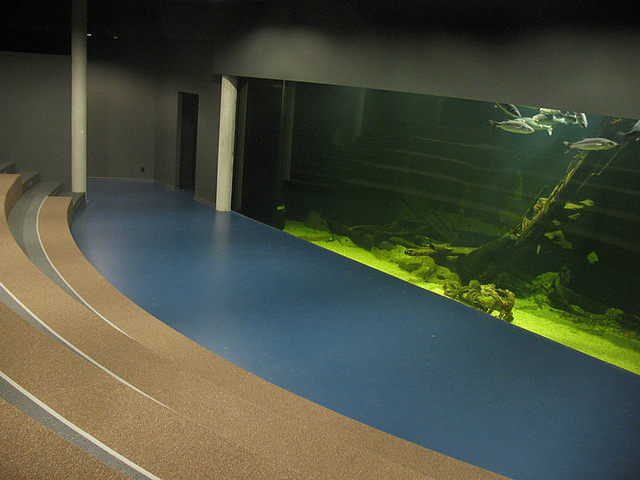 Foto 00 Noordzee aquarium Kennis- en innovatiecentrum Nes Ameland