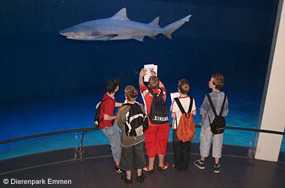 Foto 02 haaien aquarium NDP Emmen 2