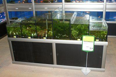 Waterplantenbak bij nieuwbouw tuincentrum