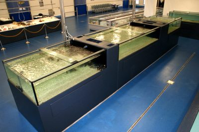 aquarium afdeling internationale horeca groothandel