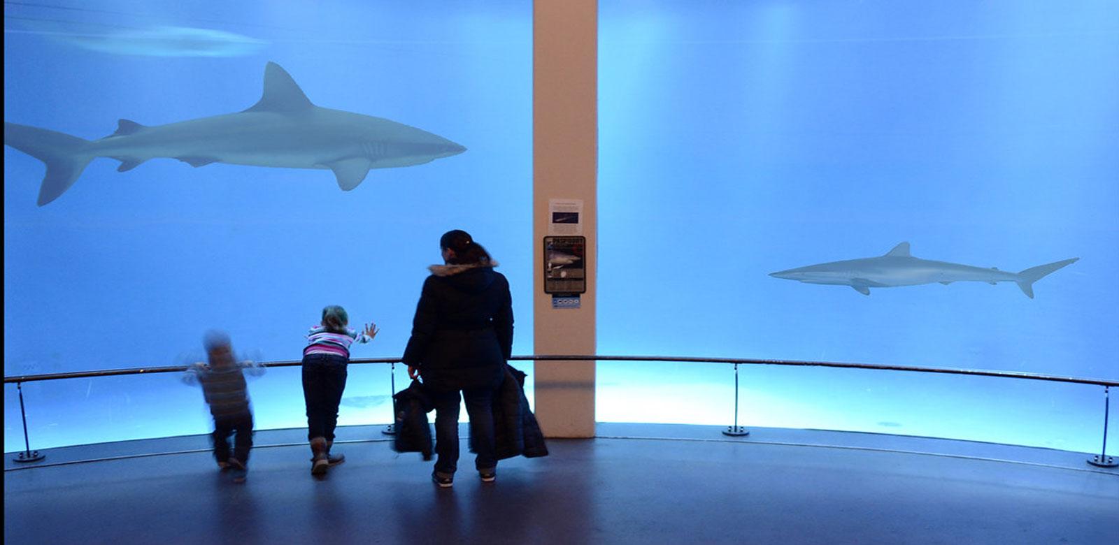 haaienbassin-Emmen fotografie door Rene Mensen