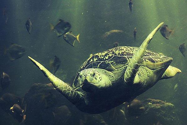 Soepschildpadden aquarium Wa
