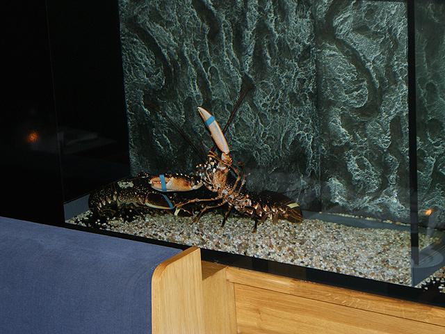 Foto 06 Op maat gemaakt homarium bij een restaurant