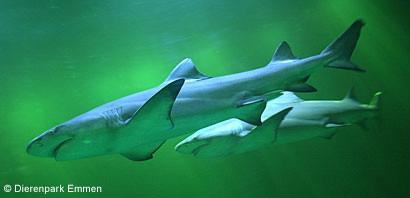 Foto 01 Haaien Aquarium Ndp Emmen 1
