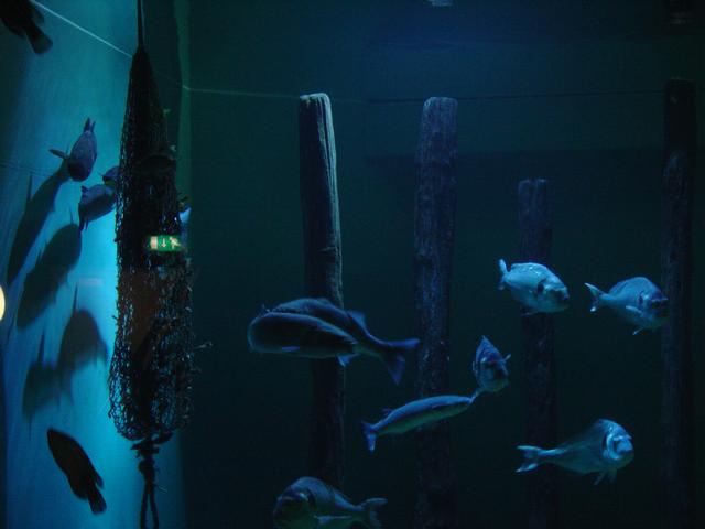 Foto 02 Oosterschelde Aquarium Aquapolis Neeltje Jans