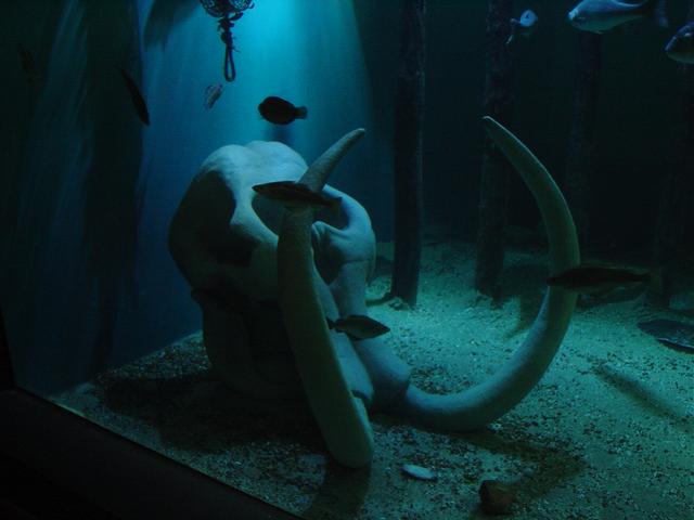 Foto 03 Oosterschelde Aquarium Aquapolis Neeltje Jans