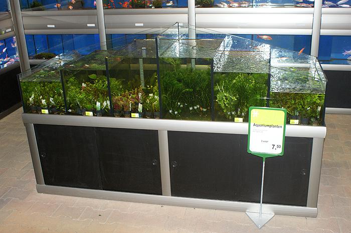 Foto 05 Waterplantenbak Bij Nieuwbouw Tuincentrum (1)