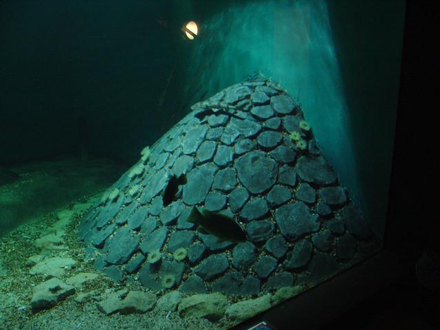 Foto 06 Oosterschelde Aquarium Aquapolis Neeltje Jans