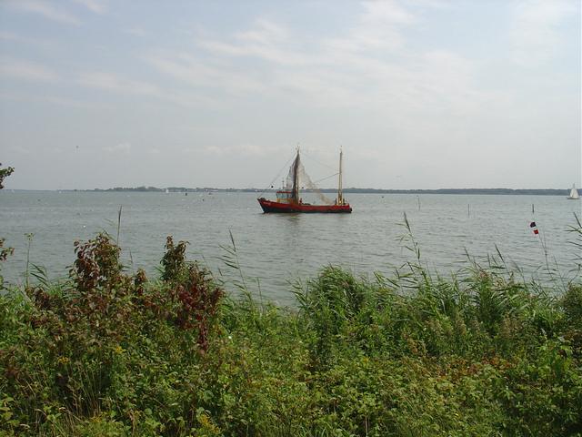 Foto 10 Project Gemeente Almere Haven Aanpak Blauwalgen (1)