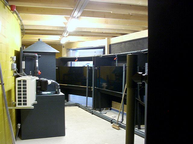 Foto 13 Ruwbouwfase Noordzee Showaquaria Amelander Museum (1)