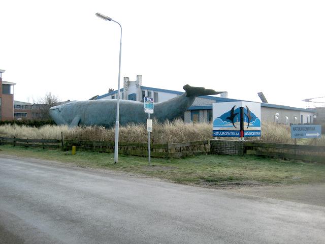 Foto 16 Natuurmuseum Ameland Oude Locatie (1)